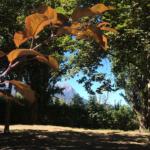 Camping à Embrun, lac de Serre Ponçon